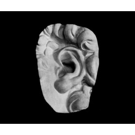 Orecchio - Particolare anatomico